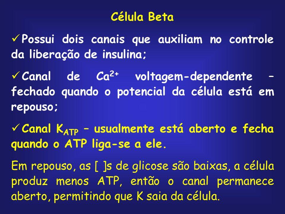 Célula Beta Possui dois canais que auxiliam no controle da liberação de insulina; Canal de Ca 2+ voltagem-dependente – fechado quando o potencial da c