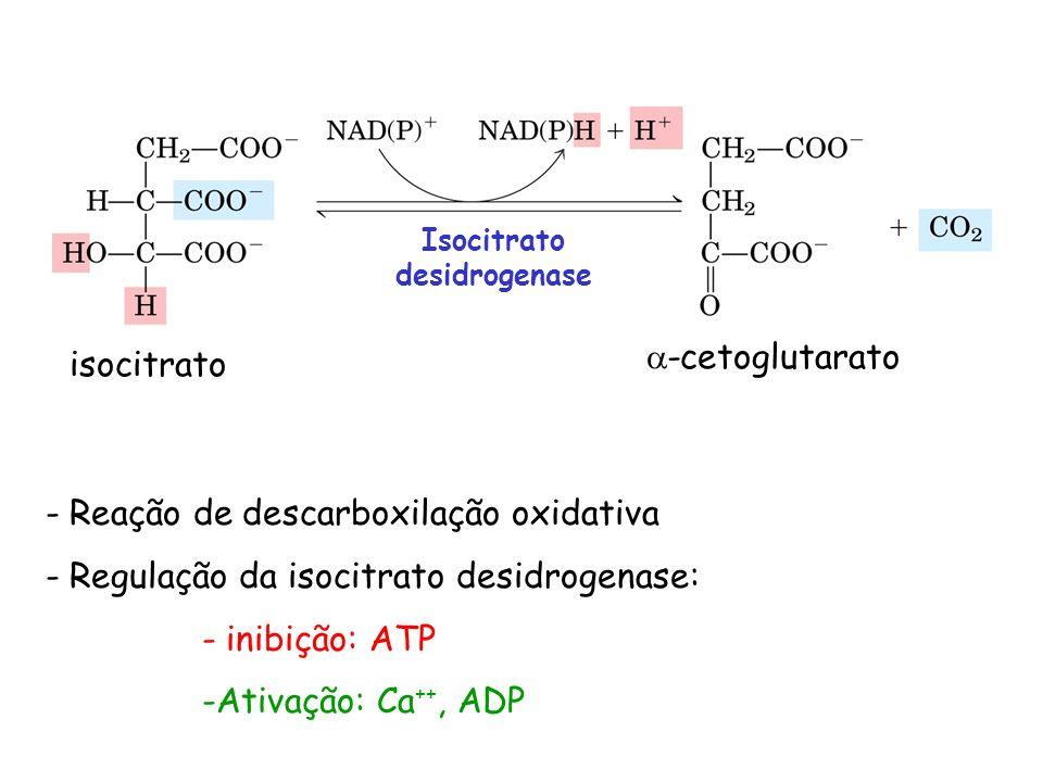 isocitrato -cetoglutarato Isocitrato desidrogenase - Reação de descarboxilação oxidativa - Regulação da isocitrato desidrogenase: - inibição: ATP -Ati