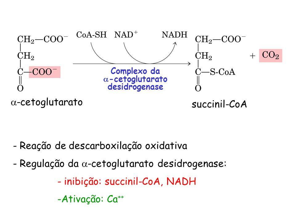 succinil-CoA -cetoglutarato Complexo da -cetoglutarato desidrogenase - Reação de descarboxilação oxidativa - Regulação da -cetoglutarato desidrogenase
