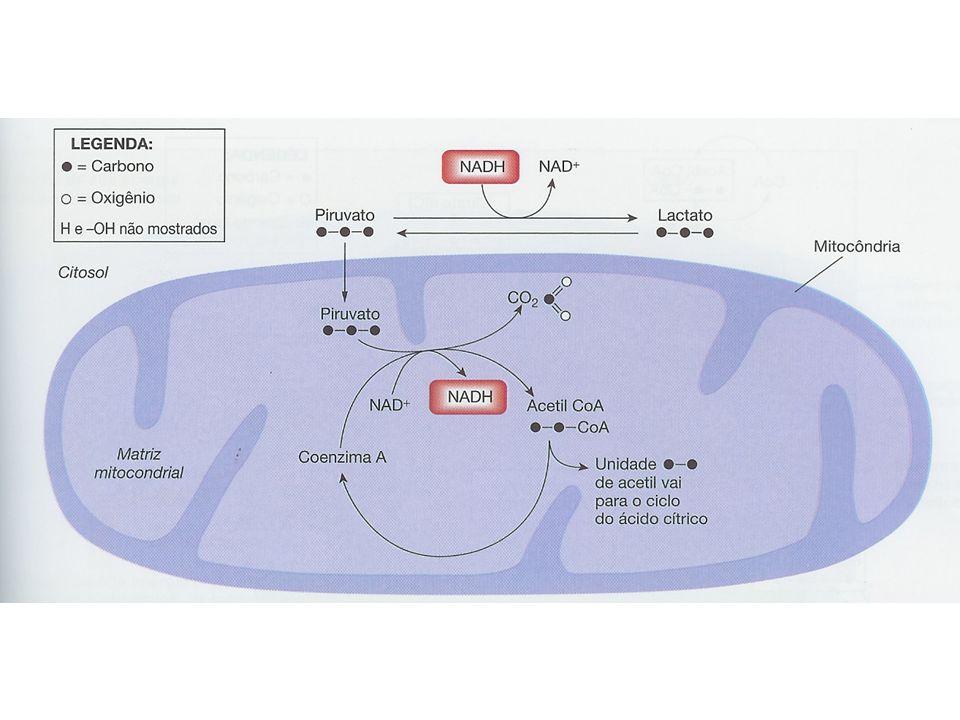 http://www.johnkyrk.com/krebs.swf http://www.science.smith.edu/departments/Biology/Bio231/krebs.html