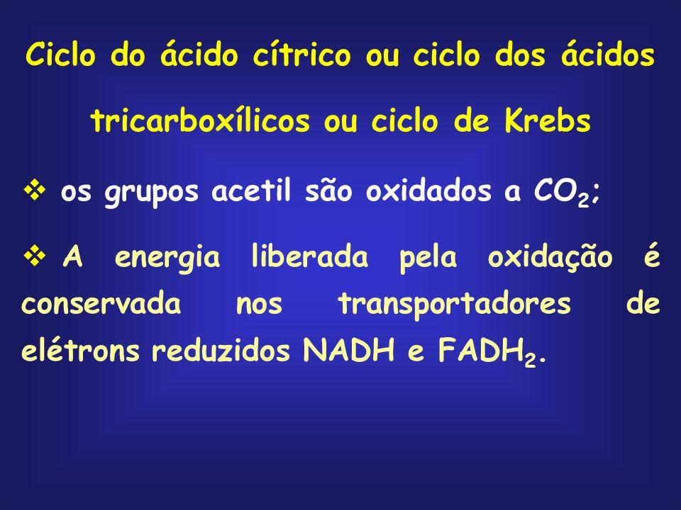 Ciclo do ácido cítrico ou ciclo dos ácidos tricarboxílicos ou ciclo de Krebs os grupos acetil são oxidados a CO 2 ; A energia liberada pela oxidação é