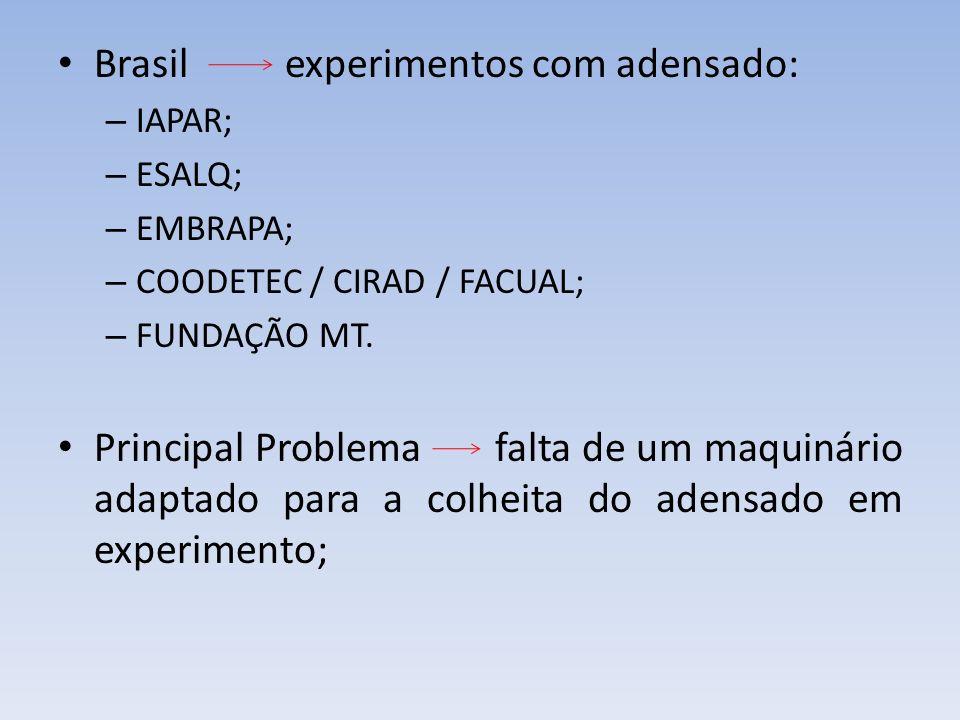 Brasil experimentos com adensado: – IAPAR; – ESALQ; – EMBRAPA; – COODETEC / CIRAD / FACUAL; – FUNDAÇÃO MT. Principal Problema falta de um maquinário a