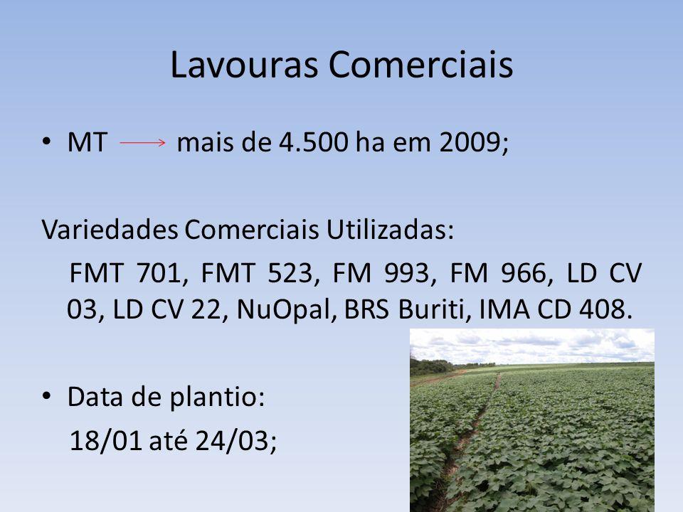 Lavouras Comerciais MT mais de 4.500 ha em 2009; Variedades Comerciais Utilizadas: FMT 701, FMT 523, FM 993, FM 966, LD CV 03, LD CV 22, NuOpal, BRS B