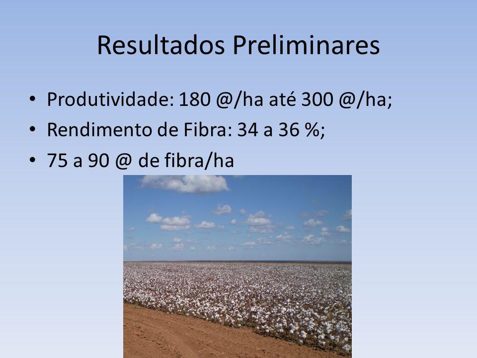 Resultados Preliminares Produtividade: 180 @/ha até 300 @/ha; Rendimento de Fibra: 34 a 36 %; 75 a 90 @ de fibra/ha