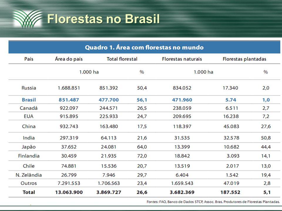 Afirmação & Ruptura Florestas no Brasil