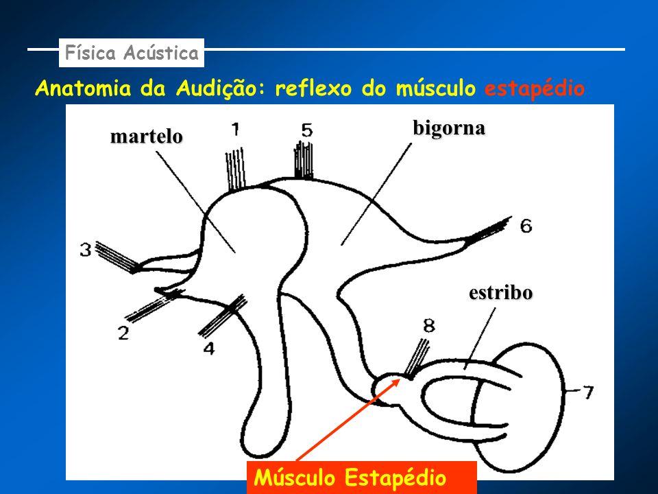 Anatomia da Audição: reflexo do músculo estapédio Física Acústica martelo bigorna estribo Músculo Estapédio