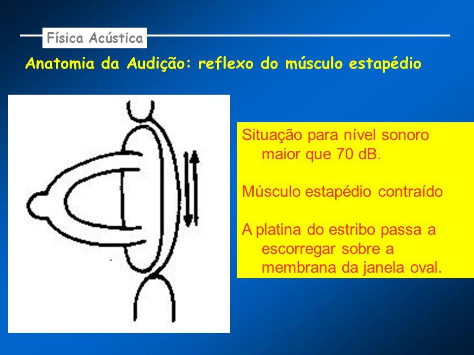 Anatomia da Audição: reflexo do músculo estapédio Física Acústica Situação para nível sonoro maior que 70 dB. Músculo estapédio contraído A platina do