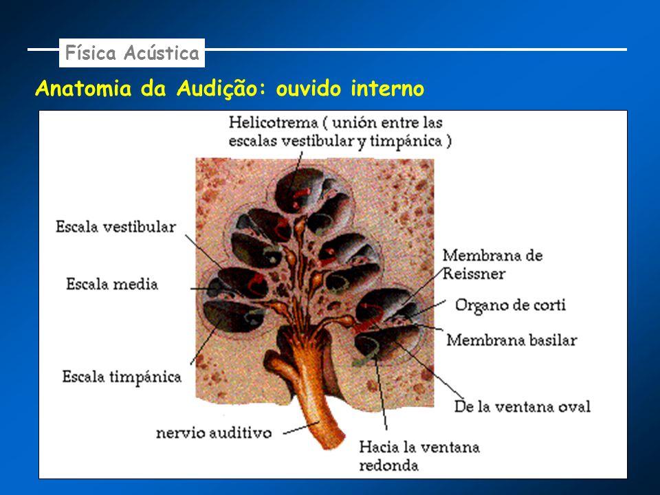Anatomia da Audição: ouvido interno Física Acústica