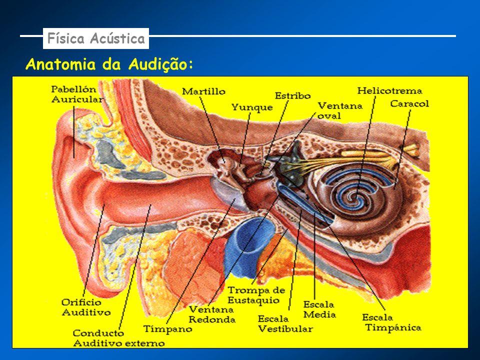 Anatomia da Audição: Física Acústica