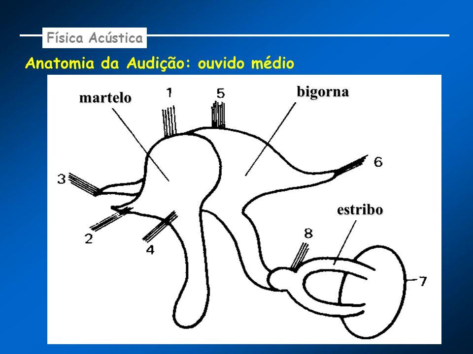 Anatomia da Audição: ouvido médio Física Acústica martelo bigorna estribo