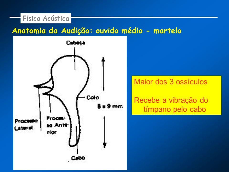 Anatomia da Audição: ouvido médio - martelo Física Acústica Maior dos 3 ossículos Recebe a vibração do tímpano pelo cabo