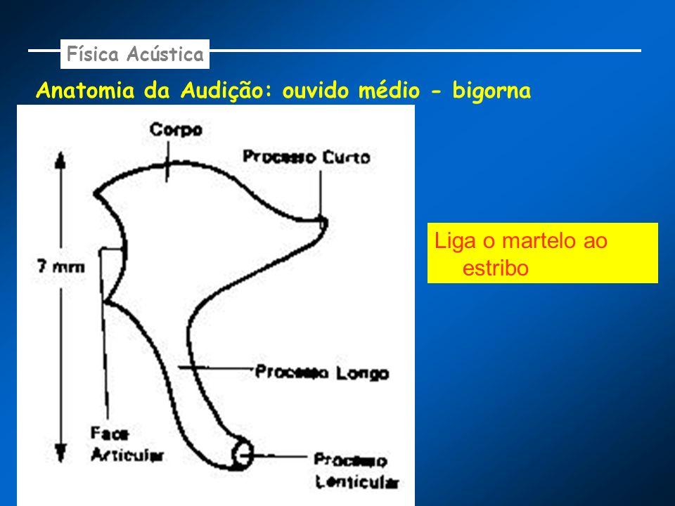 Anatomia da Audição: ouvido médio - bigorna Física Acústica Liga o martelo ao estribo