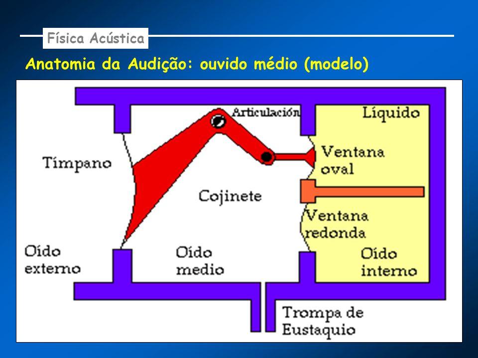 Anatomia da Audição: ouvido médio (modelo) Física Acústica