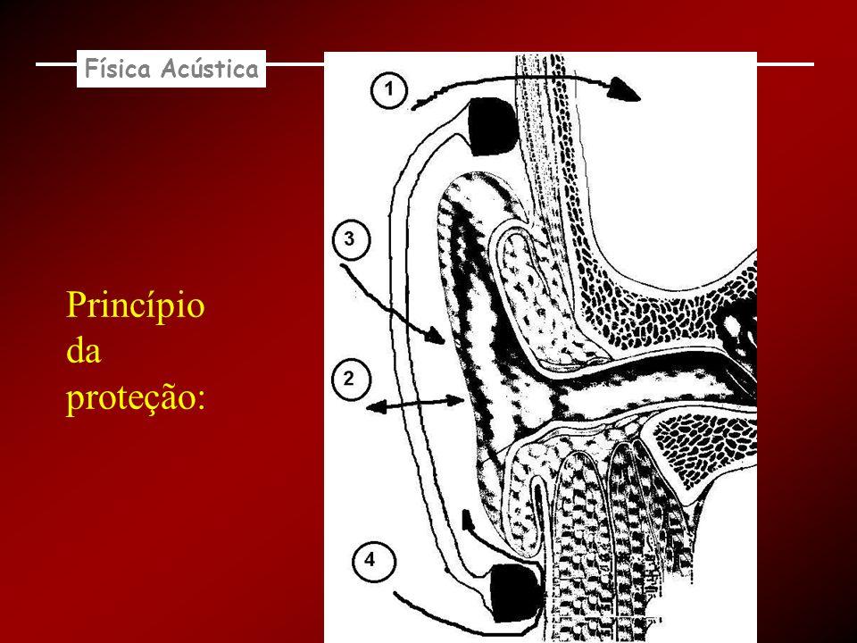 Física Acústica Princípio da proteção:
