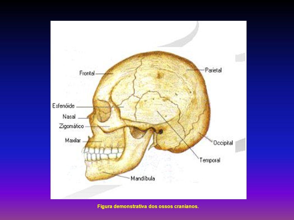 Figura demonstrativa dos ossos cranianos.