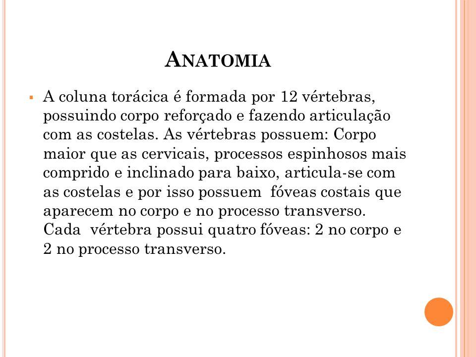A NATOMIA A coluna torácica é formada por 12 vértebras, possuindo corpo reforçado e fazendo articulação com as costelas. As vértebras possuem: Corpo m