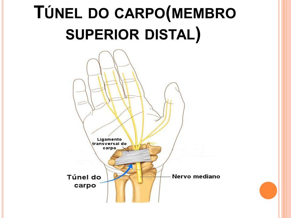 A NATOMIA São oito ossos distribuídos em duas fileiras: proximal e distal.