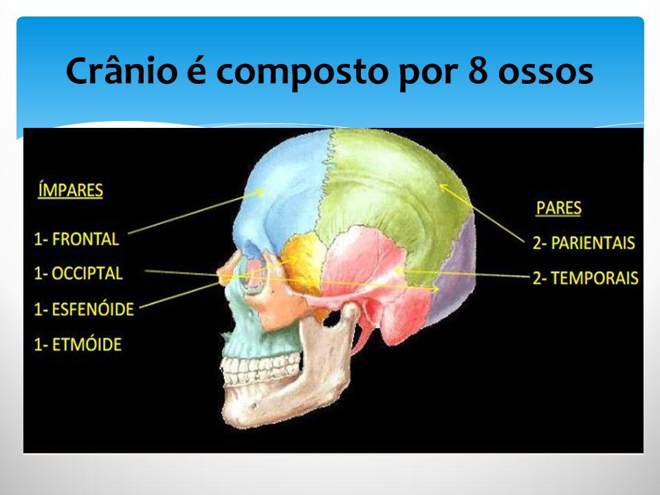 Crânio é composto por 8 ossos PARES 2-PARIETAIS 2-TEMPORAIS S