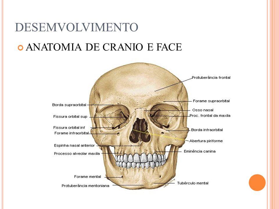 POSICIONAMENTOS DE CRÂNIO E FACE Vejamos a seguir alguns posicionamentos usados por radiologistas para diagnosticar fraturas e patologias da face como a sinusite vista anteriormente.