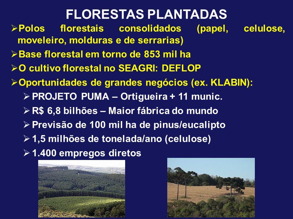 FLORESTAS PLANTADAS Polos florestais consolidados (papel, celulose, moveleiro, molduras e de serrarias) Base florestal em torno de 853 mil ha O cultiv