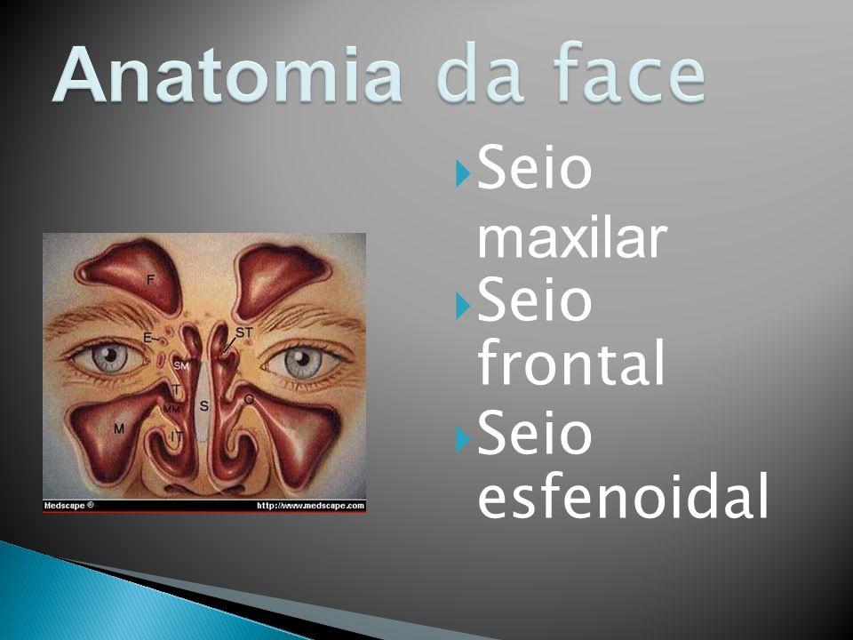 Seio maxilar Seio frontal Seio esfenoidal