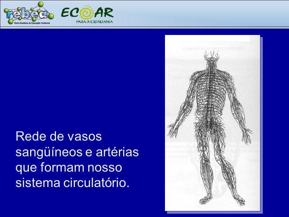 Rede de vasos sangüíneos e artérias que formam nosso sistema circulatório.