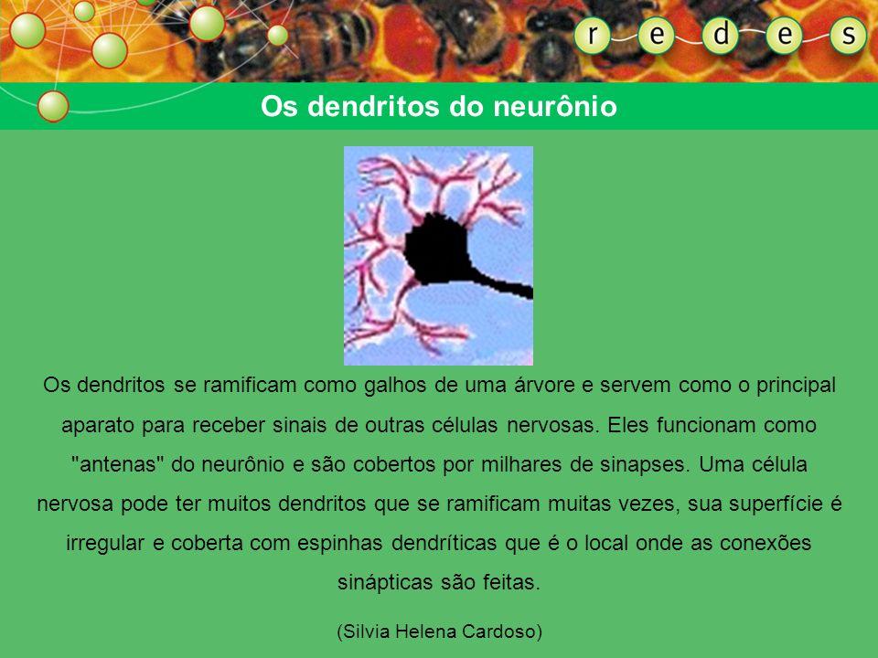 Os dendritos do neurônio Os dendritos se ramificam como galhos de uma árvore e servem como o principal aparato para receber sinais de outras células nervosas.