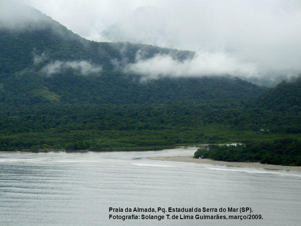 Praia da Almada, Pq. Estadual da Serra do Mar (SP). Fotografia: Solange T. de Lima Guimarães, março/2009.