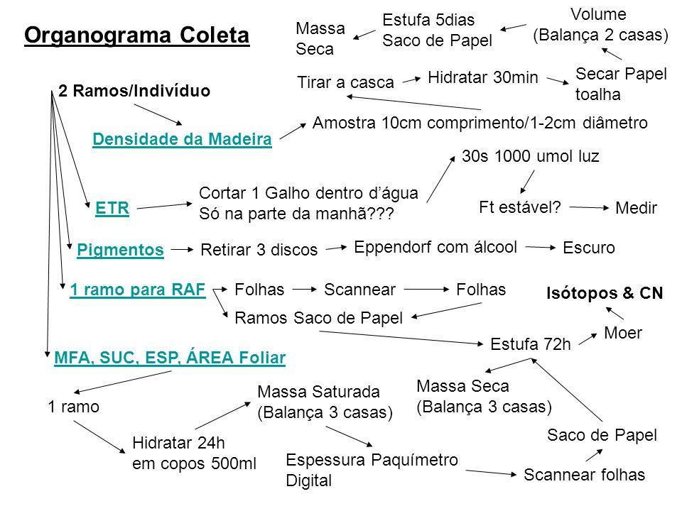Organograma Coleta 2 Ramos/Indivíduo Densidade da Madeira Amostra 10cm comprimento/1-2cm diâmetro ETR Cortar 1 Galho dentro dágua Só na parte da manhã