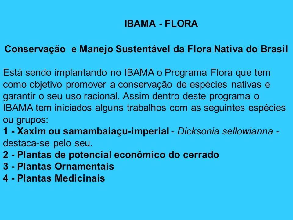 IBAMA - FLORA Conservação e Manejo Sustentável da Flora Nativa do Brasil Está sendo implantando no IBAMA o Programa Flora que tem como objetivo promov