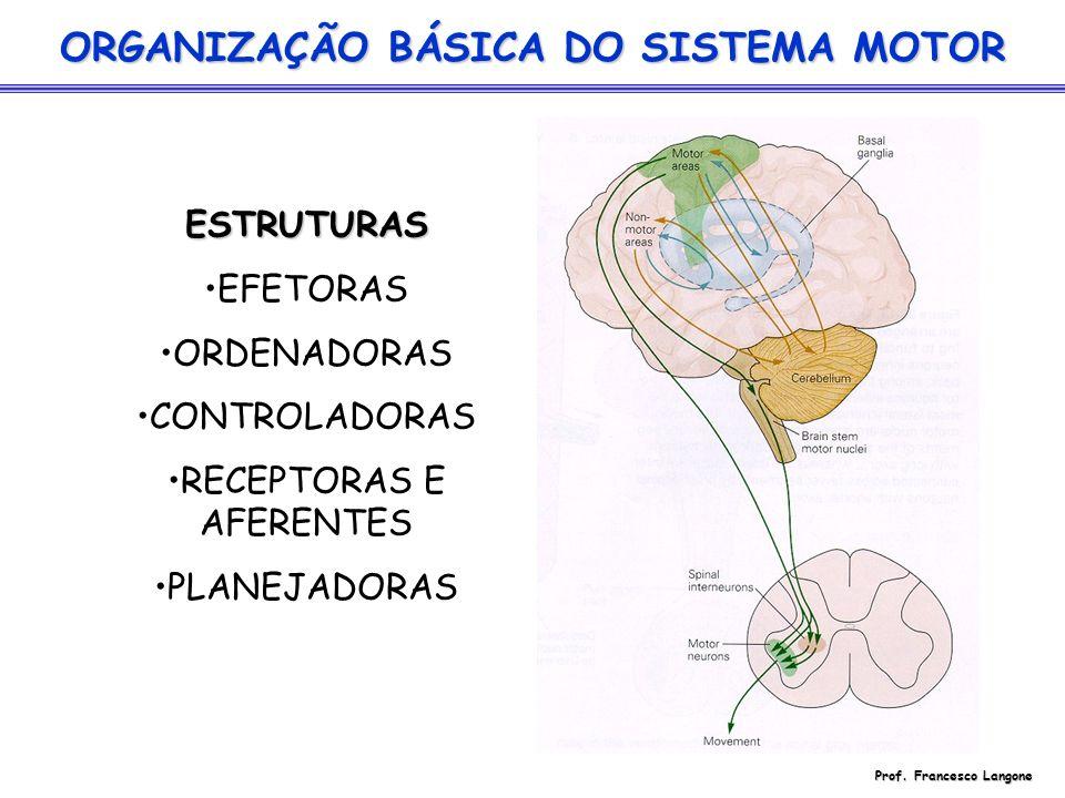 ORGANIZAÇÃO BÁSICA DO SISTEMA MOTOR ESTRUTURAS EFETORAS ORDENADORAS CONTROLADORAS RECEPTORAS E AFERENTES PLANEJADORAS Prof. Francesco Langone