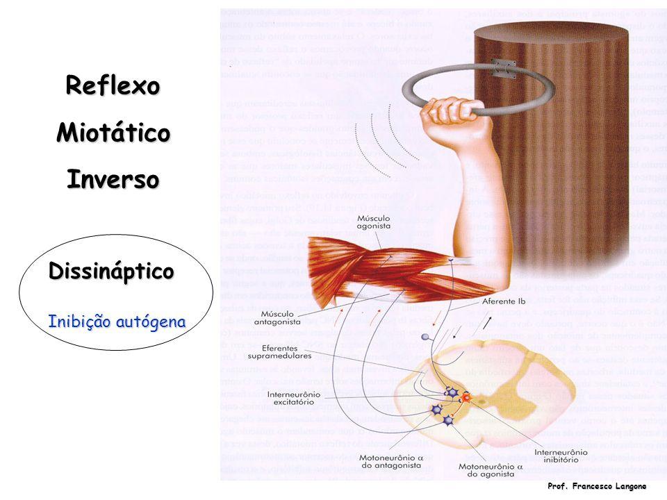 ReflexoMiotáticoInverso Dissináptico Inibição autógena