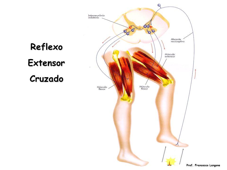 ReflexoExtensorCruzado