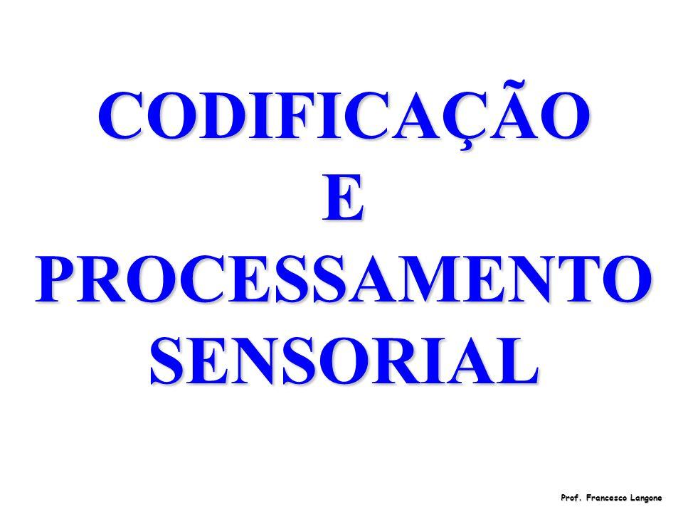 CODIFICAÇÃO E PROCESSAMENTO SENSORIAL Prof. Francesco Langone