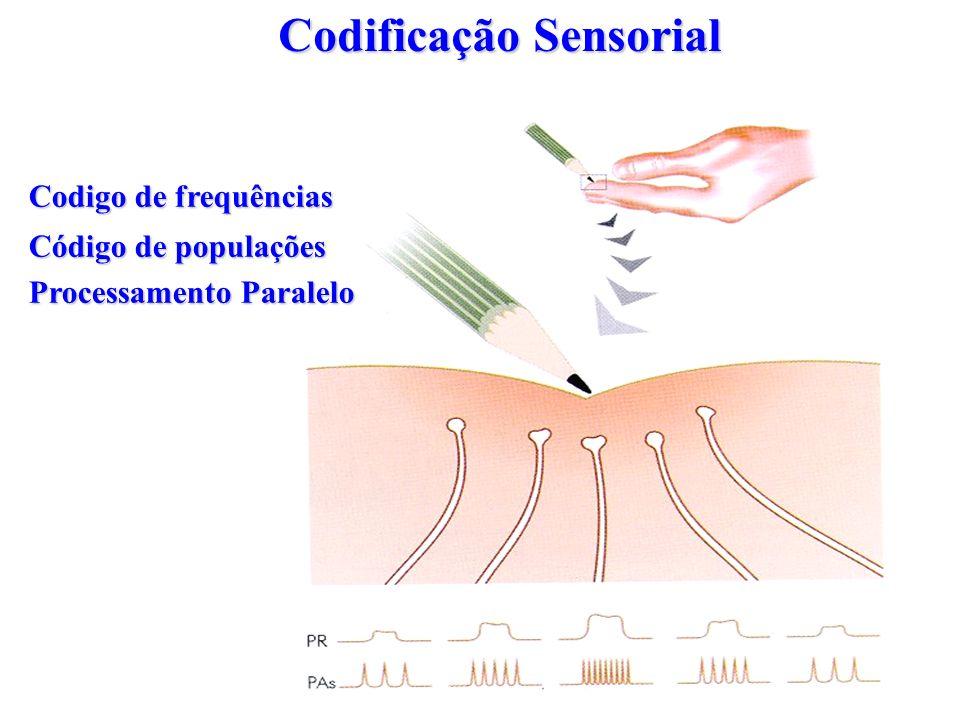 Codigo de frequências Código de populações Processamento Paralelo Codificação Sensorial