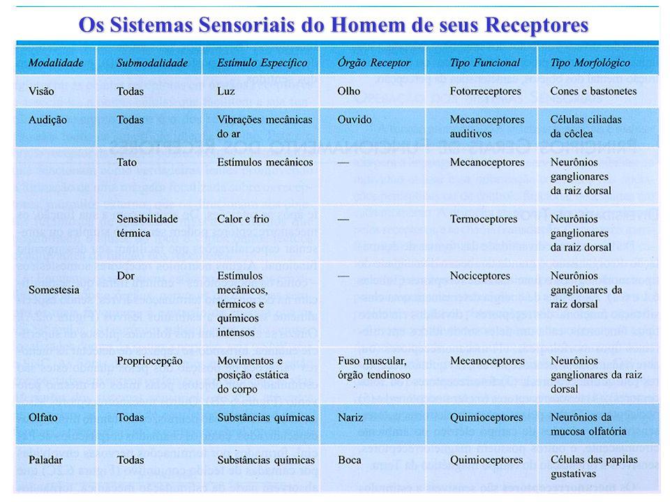 Os Sistemas Sensoriais do Homem de seus Receptores