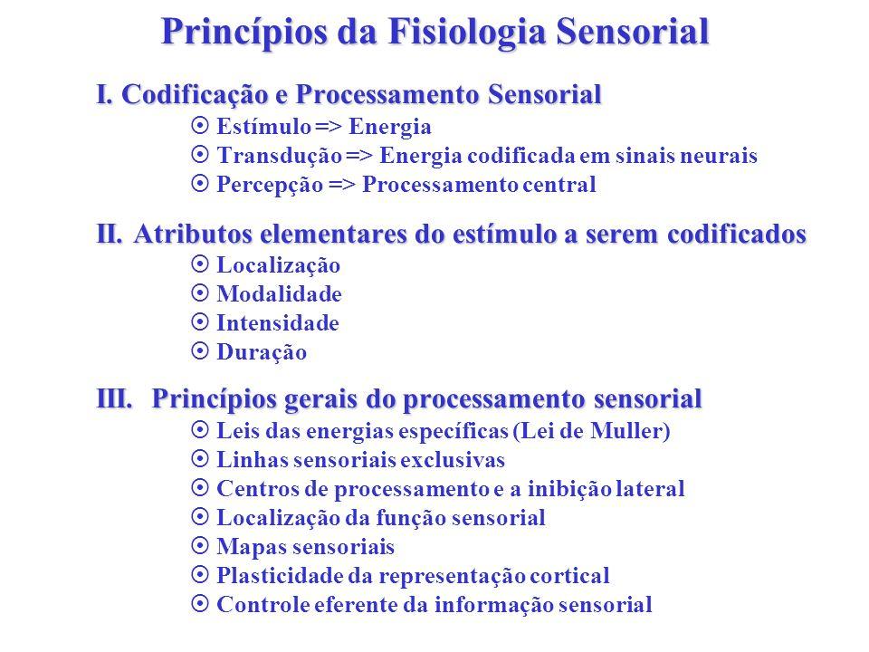 Princípios da Fisiologia Sensorial I. Codificação e Processamento Sensorial Estímulo => Energia Transdução => Energia codificada em sinais neurais Per