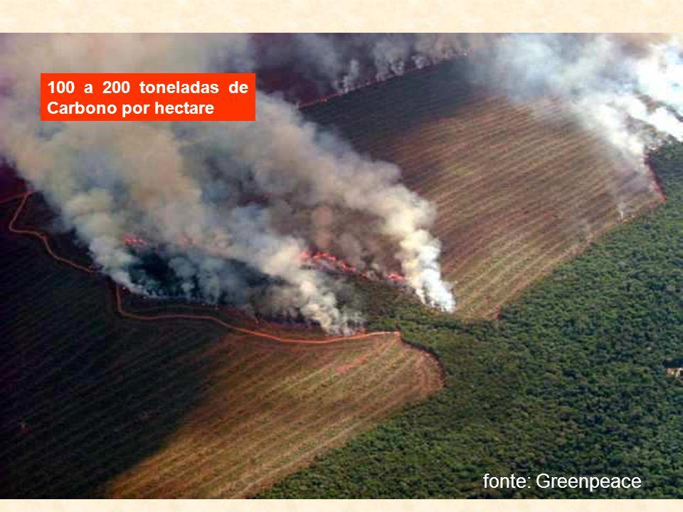 fonte: Greenpeace 100 a 200 toneladas de Carbono por hectare