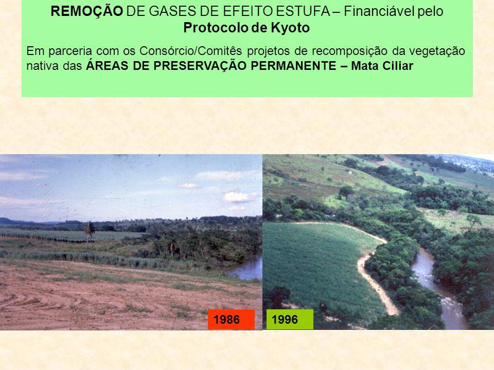 REMOÇÃO DE GASES DE EFEITO ESTUFA – Financiável pelo Protocolo de Kyoto Em parceria com os Consórcio/Comitês projetos de recomposição da vegetação nativa das ÁREAS DE PRESERVAÇÃO PERMANENTE – Mata Ciliar 19861996