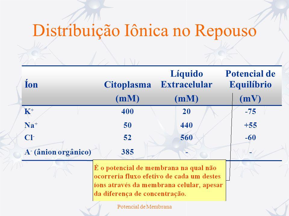 Potencial de Membrana Distribuição Iônica no Repouso --385A - (ânion orgânico) -6056052Cl - +5544050Na + -7520400K+K+ Potencial de Equilíbrio (mV) Líq