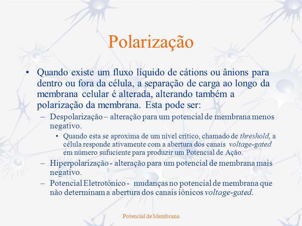 Potencial de Membrana Polarização Quando existe um fluxo líquido de cátions ou ânions para dentro ou fora da célula, a separação de carga ao longo da