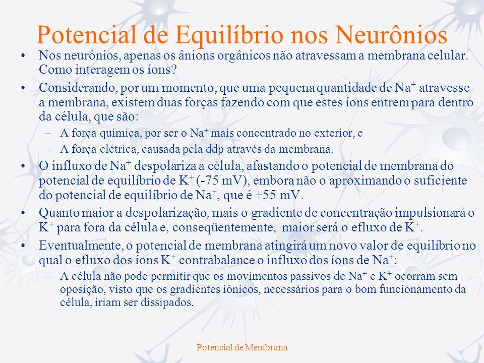 Potencial de Membrana Potencial de Equilíbrio nos Neurônios Nos neurônios, apenas os ânions orgânicos não atravessam a membrana celular. Como interage