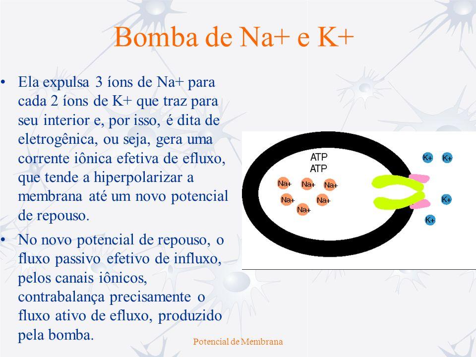 Potencial de Membrana Bomba de Na+ e K+ Ela expulsa 3 íons de Na+ para cada 2 íons de K+ que traz para seu interior e, por isso, é dita de eletrogênic