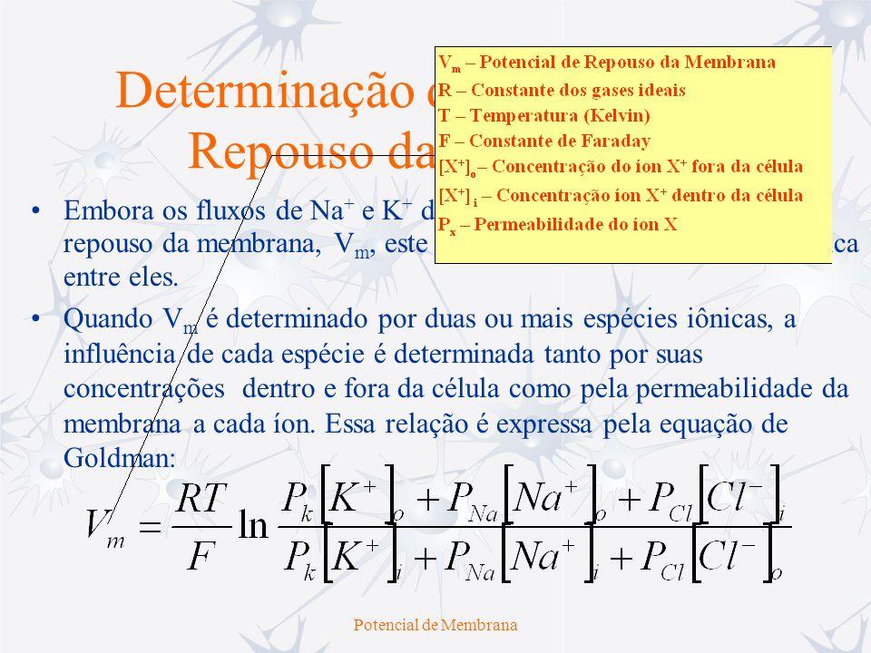 Potencial de Membrana Embora os fluxos de Na + e K + definam o valor do potencial de repouso da membrana, V m, este não é igual a E K nem a E Na, mas