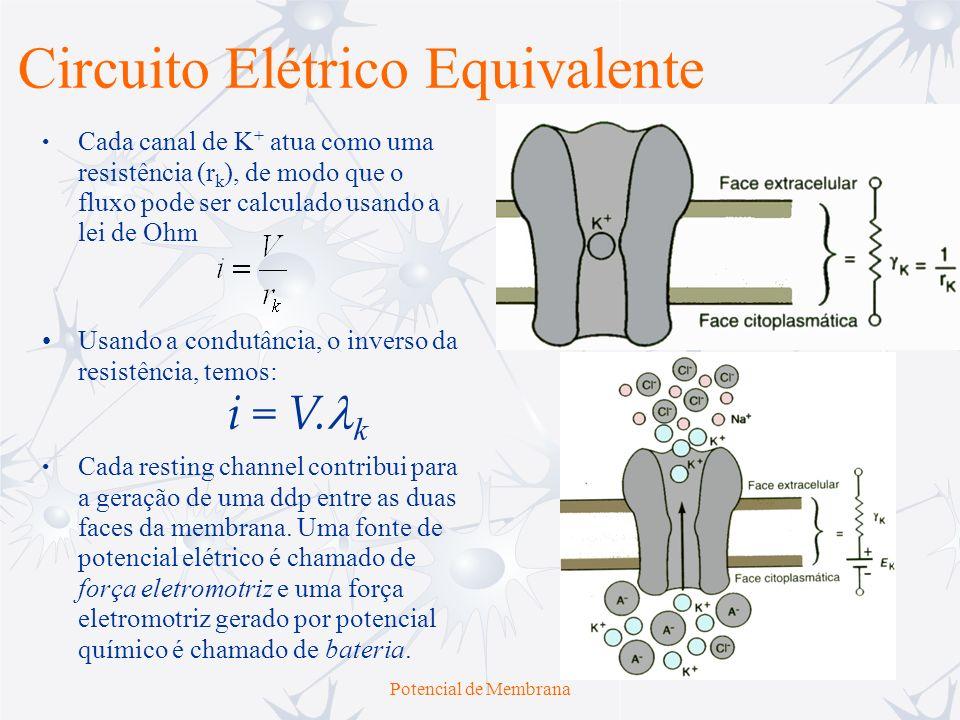 Potencial de Membrana Circuito Elétrico Equivalente Usando a condutância, o inverso da resistência, temos: Cada resting channel contribui para a geraç