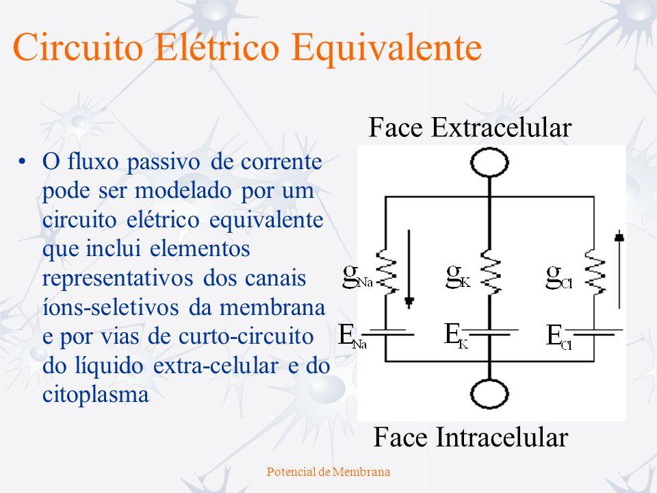 Potencial de Membrana O fluxo passivo de corrente pode ser modelado por um circuito elétrico equivalente que inclui elementos representativos dos cana