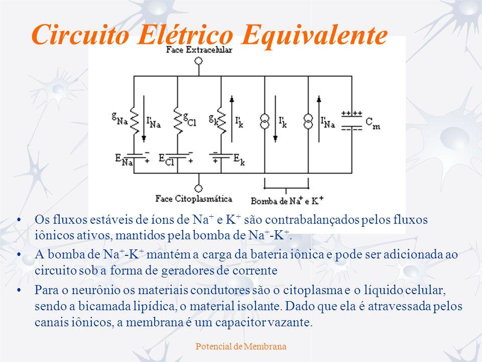 Potencial de Membrana Circuito Elétrico Equivalente Os fluxos estáveis de íons de Na + e K + são contrabalançados pelos fluxos iônicos ativos, mantido