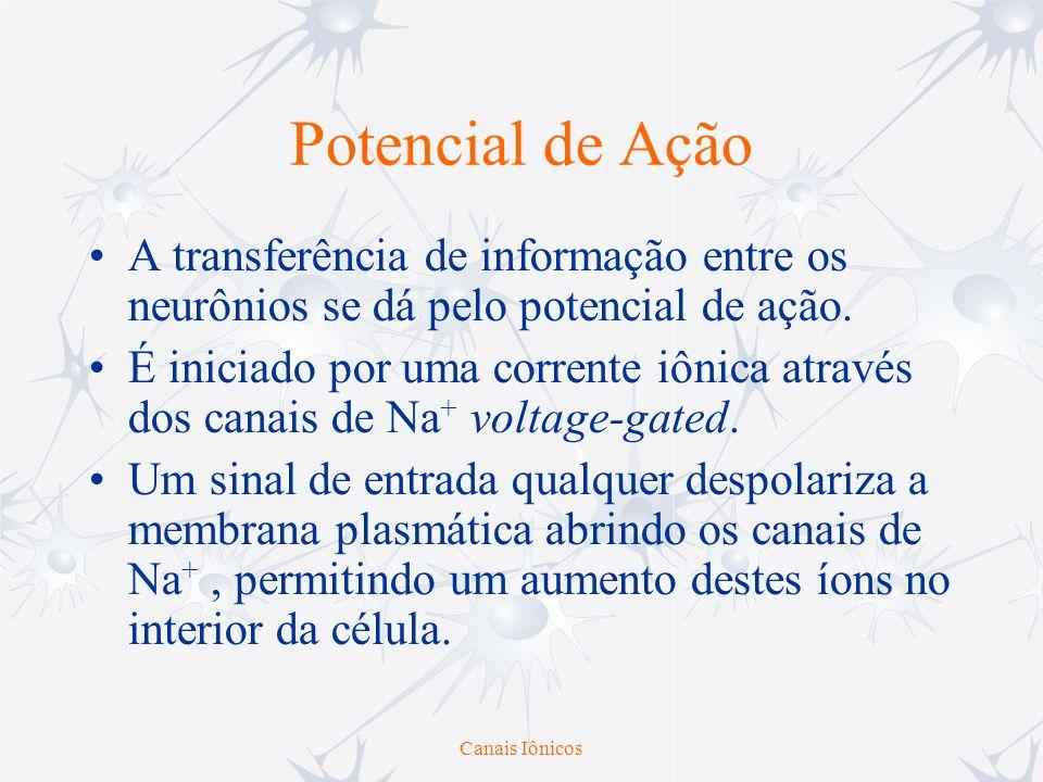 Canais Iônicos Potencial de Ação A transferência de informação entre os neurônios se dá pelo potencial de ação. É iniciado por uma corrente iônica atr