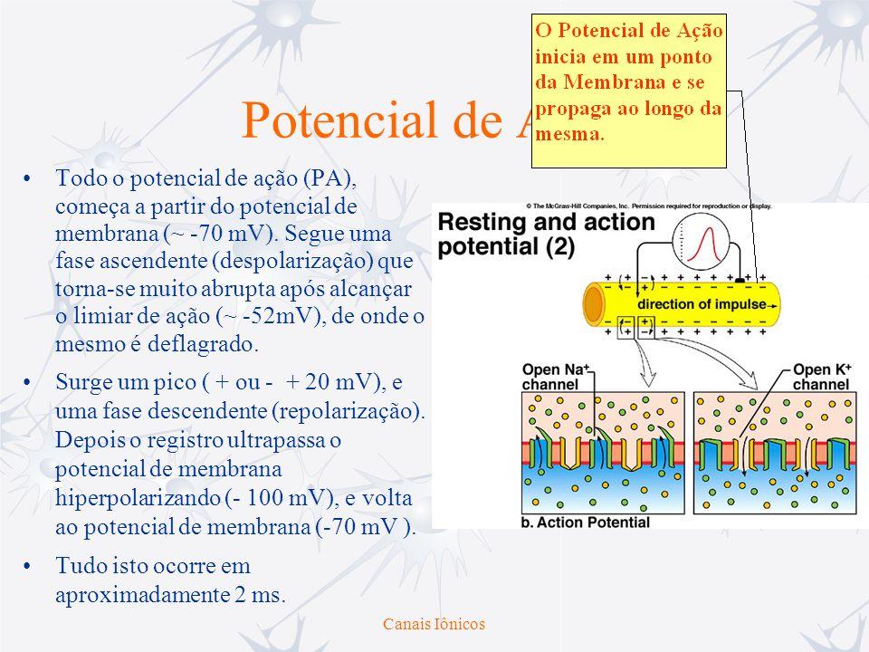 Canais Iônicos Potencial de Ação Todo o potencial de ação (PA), começa a partir do potencial de membrana (~ -70 mV). Segue uma fase ascendente (despol