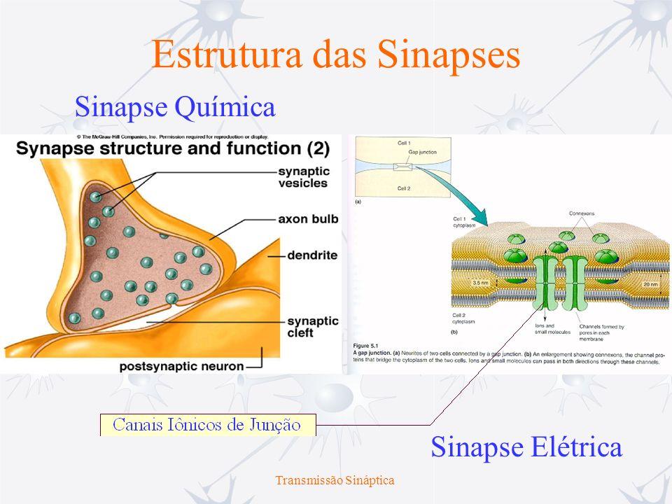 Transmissão Sináptica Estrutura das Sinapses Sinapse Química Sinapse Elétrica